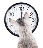 Gatto dell'orologio Fotografia Stock