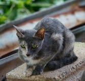 Gatto dell'orologio del gatto di dubbio che guarda gatto fotografie stock