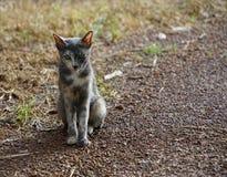 Gatto dell'orologio del gatto di dubbio che guarda gatto immagini stock libere da diritti