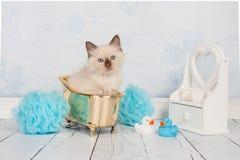 Gatto della bambola di straccio nel bagno dorato Fotografie Stock Libere da Diritti