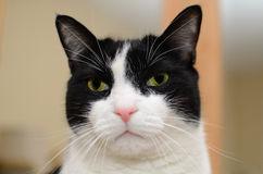 Gatto della Camera Fotografie Stock