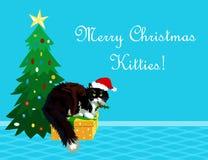 Gatto della cartolina di Natale con il vischio Immagine Stock Libera da Diritti