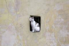 Gatto della città Immagini Stock