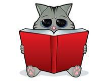 Gatto della lettura del libro Fotografie Stock