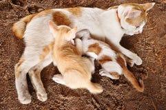 Gatto della madre con i gattini Fotografia Stock Libera da Diritti