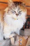Gatto della madre e piccolo gattino Fotografia Stock