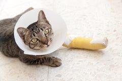 Gatto della stecca della gamba rotta Fotografia Stock Libera da Diritti