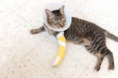 Gatto della stecca della gamba rotta Fotografie Stock Libere da Diritti