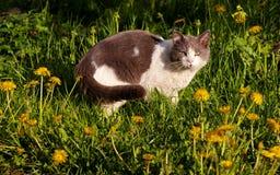 Gatto della via Fotografia Stock