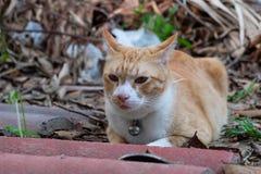 Gatto della via a casa Fotografia Stock