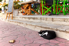 Gatto della via che dorme sulla pavimentazione fotografia stock libera da diritti