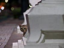 Gatto della via di Bangkok Fotografia Stock Libera da Diritti