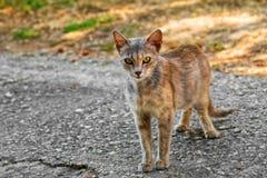 Gatto della via esterno Immagini Stock