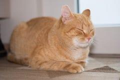Gatto dello zenzero che dorme sul tappeto Fotografia Stock