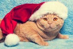 Gatto dello zenzero che porta il cappello di Santa immagine stock libera da diritti