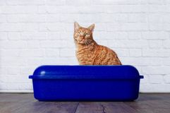 Gatto dello zenzero che si siede in un cestino per i rifiuti Immagini Stock