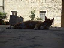 Gatto dello zenzero che si trova sul pavimento Vecchia città di Kotor, Montenegro fotografia stock