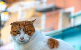 Gatto dello zenzero su una via di Positano, Italia Fotografia Stock Libera da Diritti