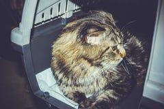 Gatto dentro il trasportatore dell'animale domestico in aeroporto Immagine Stock Libera da Diritti