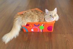 Gatto dentro una scatola Fotografie Stock Libere da Diritti
