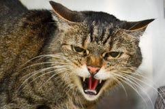 Gatto di Angery fotografia stock