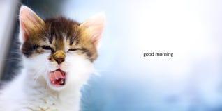 Gatto di Art Sleepy; Il fronte sonnolento sveglio di un gattino fotografia stock