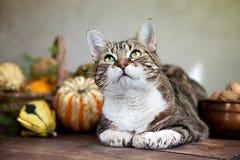 Gatto di autunno Immagine Stock