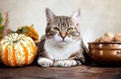 Gatto di autunno Fotografia Stock Libera da Diritti