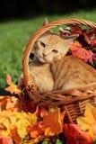 Gatto di autunno Fotografia Stock