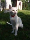 Gatto di bianco di Tom immagine stock libera da diritti