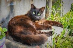 Gatto di Brown Fotografia Stock Libera da Diritti