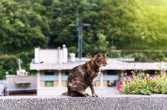 Gatto di Brown a Houtong Cat Village, distretto di Ruifang, nuova Taipei fotografia stock