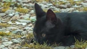 Gatto di caccia Fotografia Stock