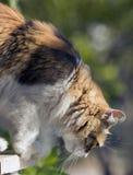 Gatto di calicò quasi che salta giù una finestra con bokeh verde fotografia stock