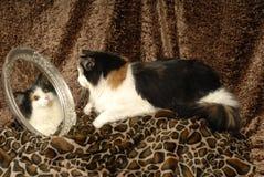 Gatto di calicò sulla stampa animale con lo specchio Immagine Stock Libera da Diritti