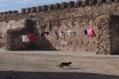 Gatto di camminata Immagini Stock Libere da Diritti
