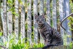 Gatto di casa grigio fuori Fotografia Stock Libera da Diritti