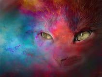 Gatto di colore Immagine Stock Libera da Diritti