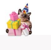 Gatto di compleanno Immagine Stock
