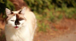 Gatto di conversazione Fotografia Stock