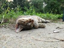 Gatto di cura di animale domestico che dorme sul pavimento immagine stock libera da diritti
