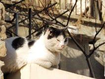 Gatto di distensione Fotografie Stock