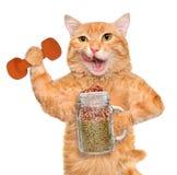 Gatto di forma fisica che giudica alimento asciutto in una tazza del barattolo vecchio dopo un allenamento Fotografie Stock