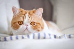 Gatto di Garfield Immagine Stock