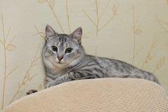 Gatto di gioco curioso, gatto che gioca, gatto pazzo divertente, giovane gatto domestico, giovane gatto di gioco nello sfondo nat Fotografia Stock Libera da Diritti
