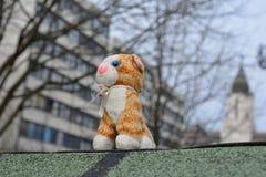 Gatto di Importat! Fotografie Stock