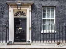 Gatto di Mouser del capo del Downing Street 10 Fotografia Stock Libera da Diritti