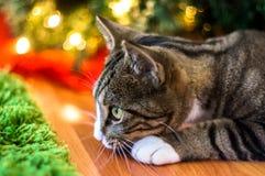 Gatto di Natale Immagine Stock Libera da Diritti
