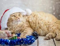Gatto di Natale in cappuccio rosso di Santa Claus Immagini Stock