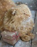 Gatto di Natale con il contenitore di regalo Fotografia Stock Libera da Diritti